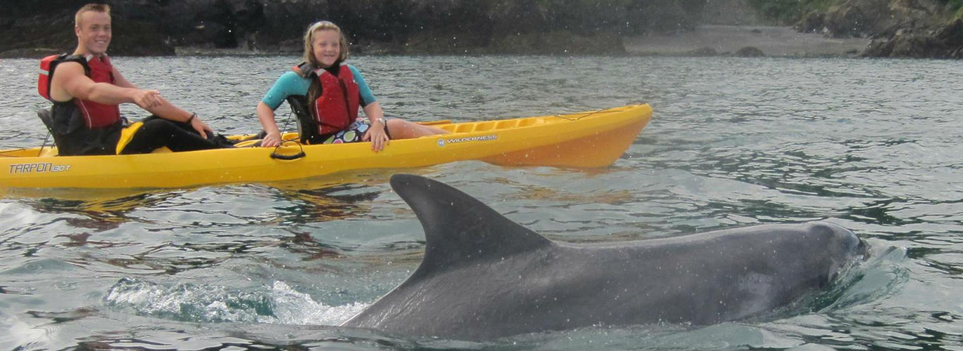 Stand Up Paddleboard & Kayak hire in North Devon, see Dolphins from Watermouth Cove
